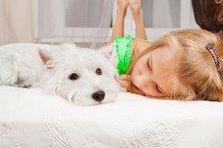 west highland white puppy on bed