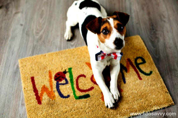JRT dog on welcome mat