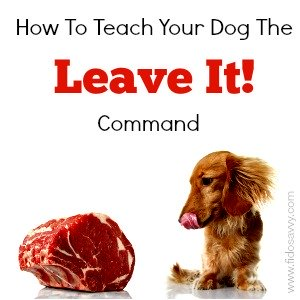 Dachshund and steak.. teaching the leave it command