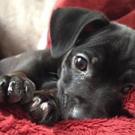 Healthy mixed breed puppy