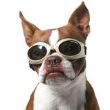 Cool dog wearing his Doggles