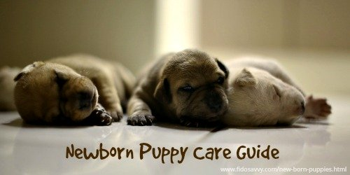 How to take care of new born puppies