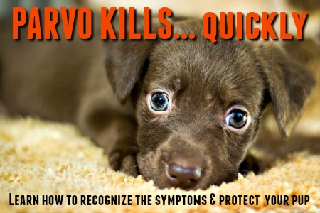 Parvovirus can be deadly for puppies