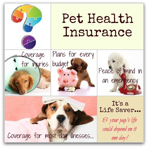 dog medical insurance infographic