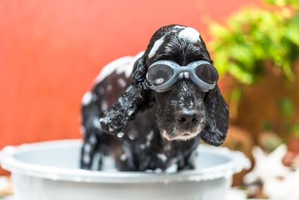 Bathing a puppy