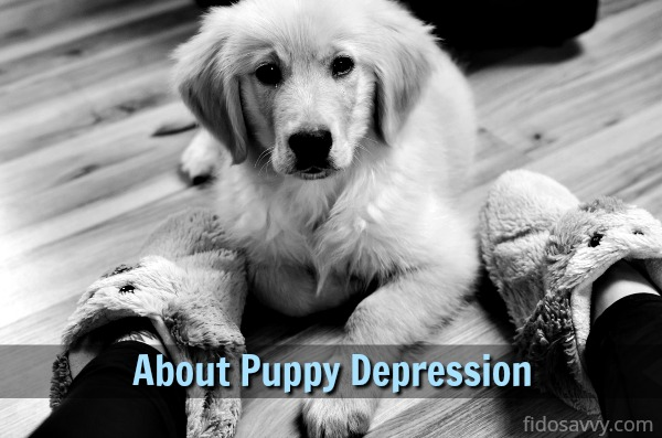 About puppy depression