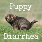 puppy has diarrhea