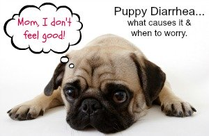 Puppy Diarrhea - Causes, Treatment & Prevention