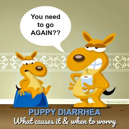 About puppy diarrhea
