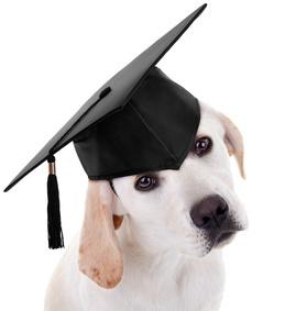 Puppy in graduation cap