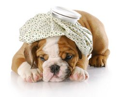 Puppy Health Guide For Busy Parents