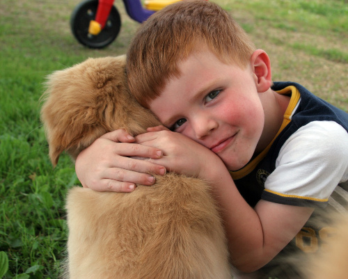 Golden Retriever puppy meeting a little boy