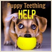 Get Puppy Teething Help Here