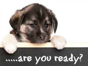 Are you ready for a new puppy?