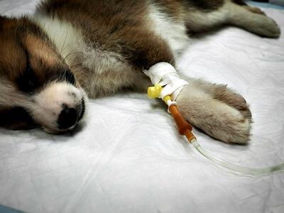 Puppy diarrhea treatment by veterinarian