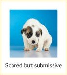 Scared pup