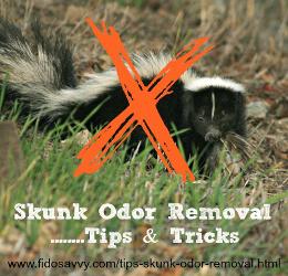 skunk odor removal tips