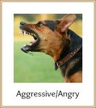 Agressive, angry dog