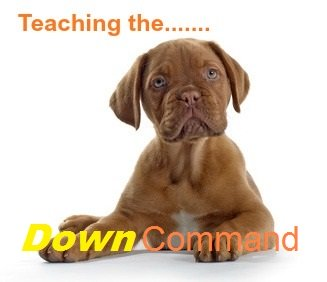 How to teach your dog the 'Down' command