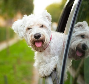 A guide to traveling with your dog