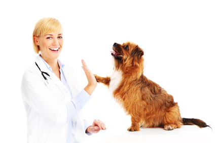 Dog health insurance could be a lifesaver for your pet.