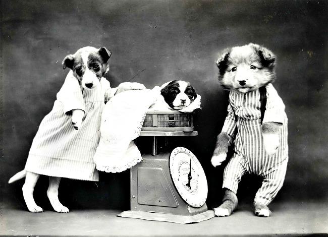 puppy being weighed