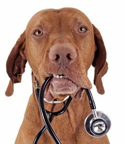Dog illness symptoms